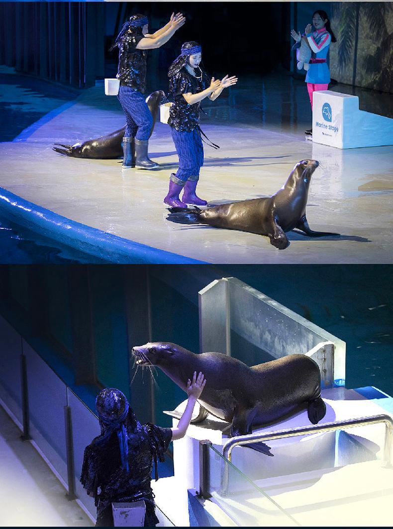 太平洋乐园动物表演详情_06.jpg