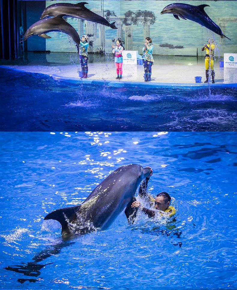 太平洋乐园动物表演详情_08.jpg