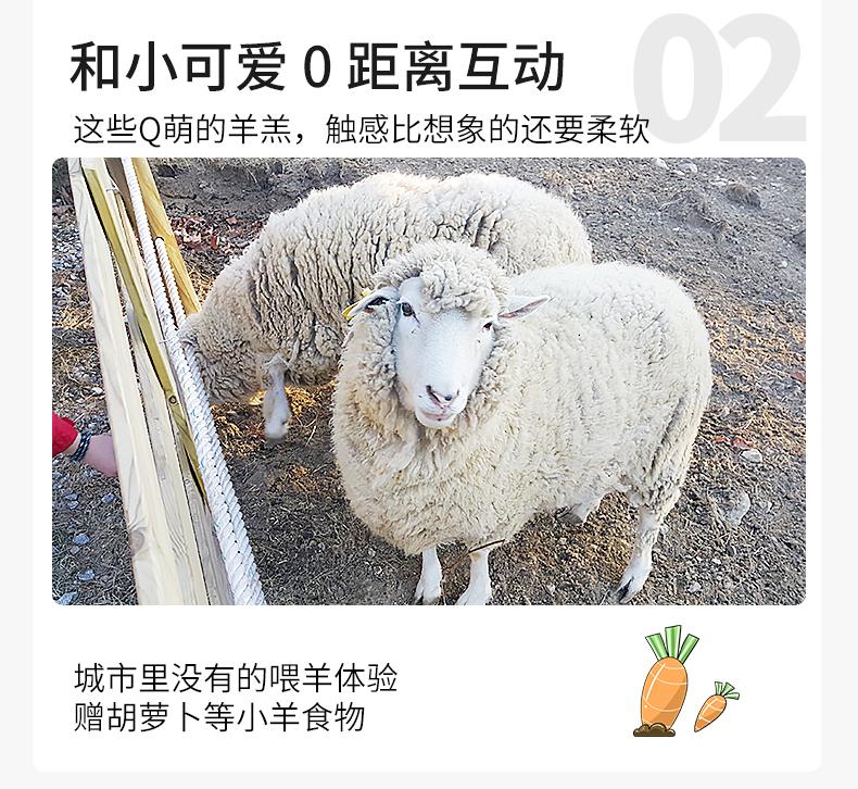 江陵一日游-详情页-新的_10.jpg