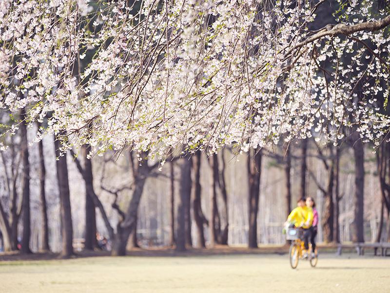 南怡岛一日游_江村铁路自行车_韩国首尔小法兰西村在线预定_韩国专业地接-韩游网