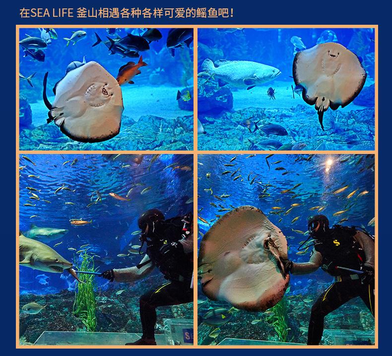 釜山水族馆-详情页_10.jpg