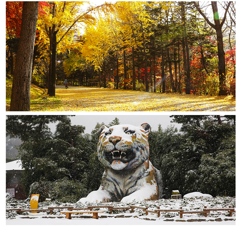 首尔乐园(首尔大公园)-详情页_10.jpg