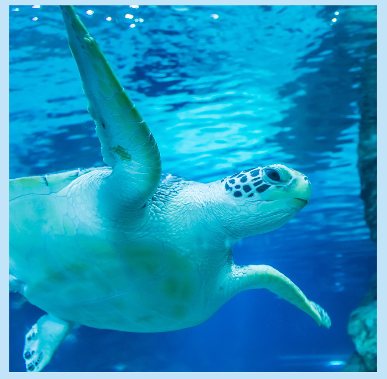 COEX水族馆-详情页_07.jpg