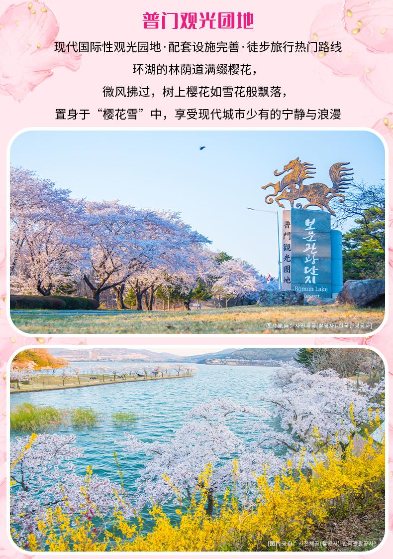 庆州樱花庆典一日游-详情页_08.jpg