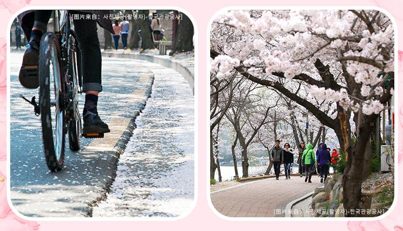 庆州樱花庆典一日游-详情页_09.jpg