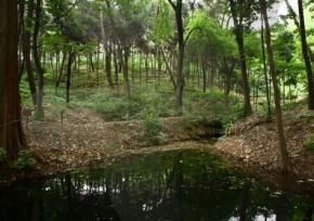 洪陵树木园