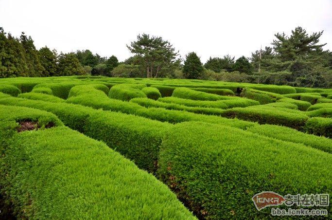 济州岛好玩的地方介绍---济州金宁迷路公园