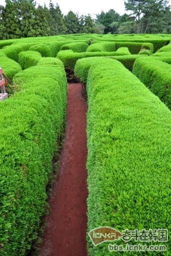 济州岛好玩的地方介绍---济州金宁迷路公园_韩国自由