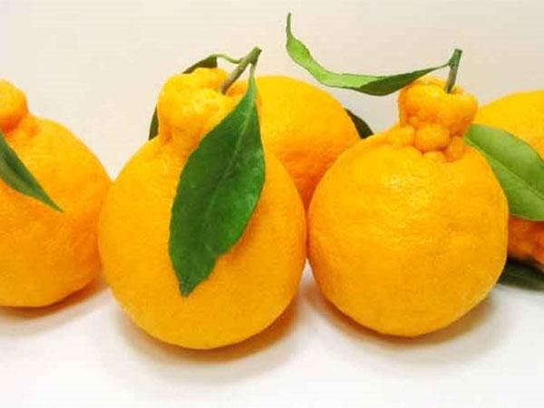 柑橘 (3).jpg