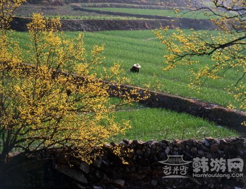 义城山茱萸花 (3).jpg