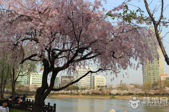 石村湖 (2).jpg