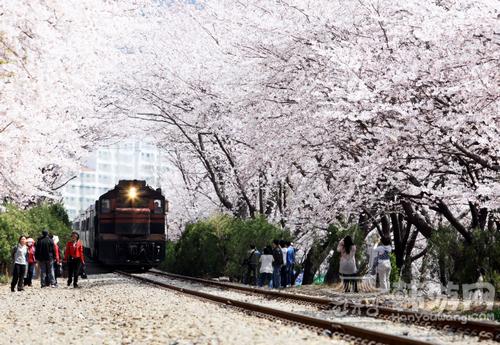 镇海樱花节 (3).png