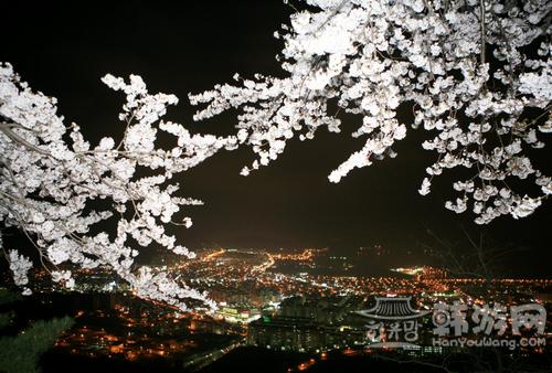镇海樱花节 (1).png