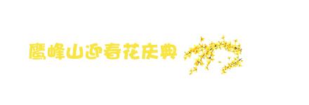 迎春花标题.jpg