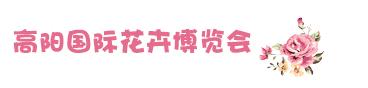 高阳国际花卉博览会.jpg