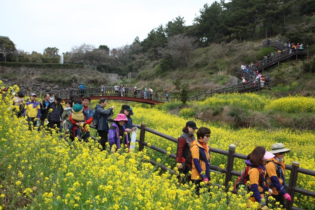 서귀포유채꽃국제걷기대회 (2).jpg