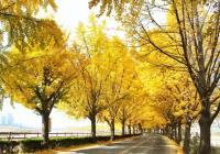 韓國秋季徒步旅遊路線推薦