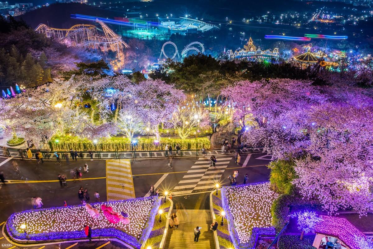 이월드별빛벚꽃축제 (39).jpg