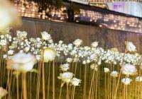 最後的浪漫,東大門設計廣場LED玫瑰花海將落幕