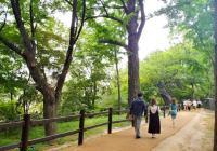 夏季高溫期間,首爾德壽宮內散步路將延長至夜間開放