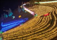 五彩斑斓的灯光庆典,2020宝城茶园灯节