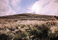 济州岛无论去过多少次,总能发现另一种美!这些小众景点你去过吗?(中篇)