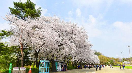首尔乐园(首尔大公园)