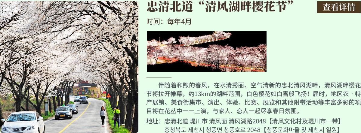 忠清北道清风湖畔樱花节