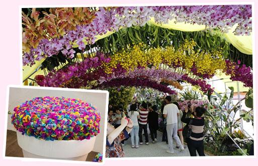 高阳国际花博览会