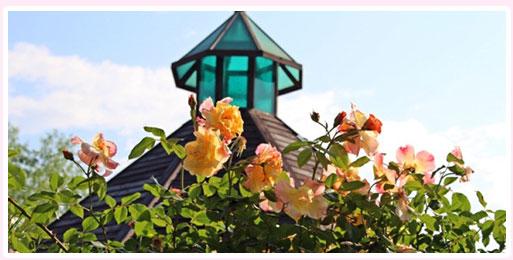 谷城世界玫瑰花节