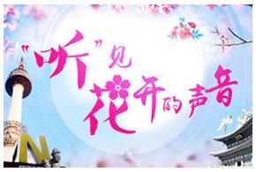 2016韩国樱花季