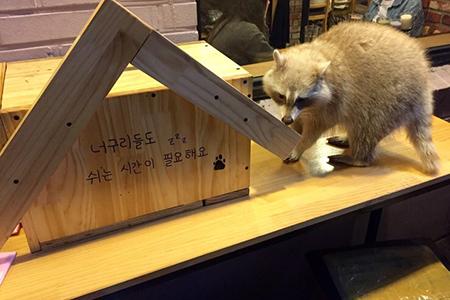 """淑大 """"BLIND ALLEY""""浣熊咖啡厅 _韩国美食_韩游网"""