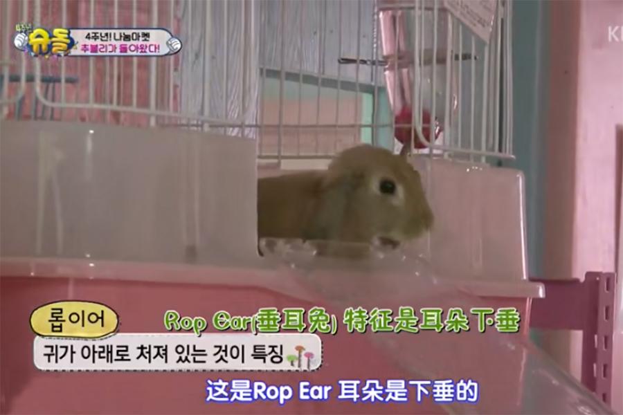 弘大 bunny cafe  兔子体验咖啡厅_韩国美食_韩游网
