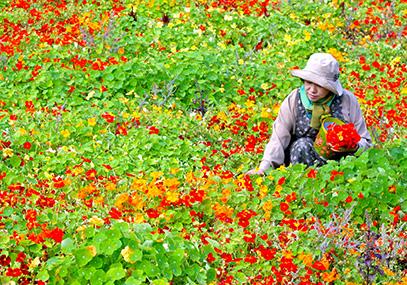 平昌香草王国农园_韩国景点_韩游网