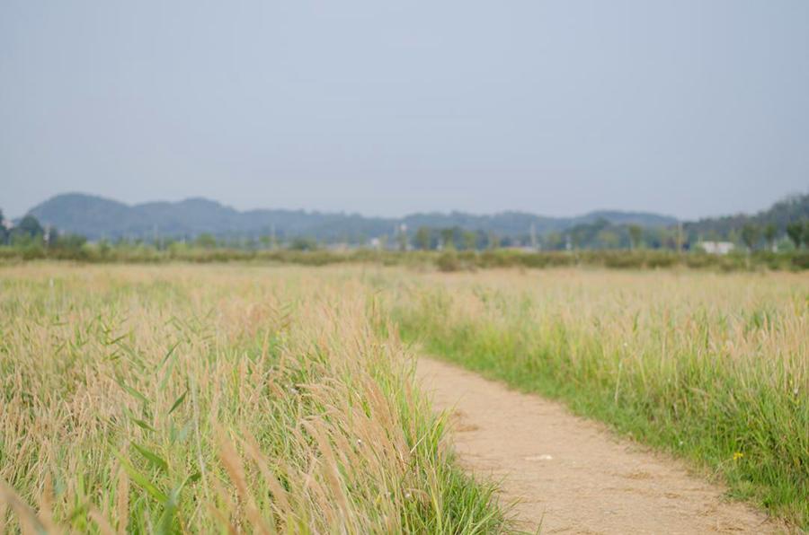 """仁川""""苏来湿地生态公园""""_韩国景点_韩游网"""