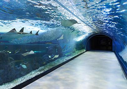 济州Aqua planet水族馆_韩国景点_韩游网