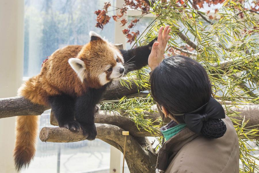 爱宝乐园野生动物园_韩国景点_韩游网