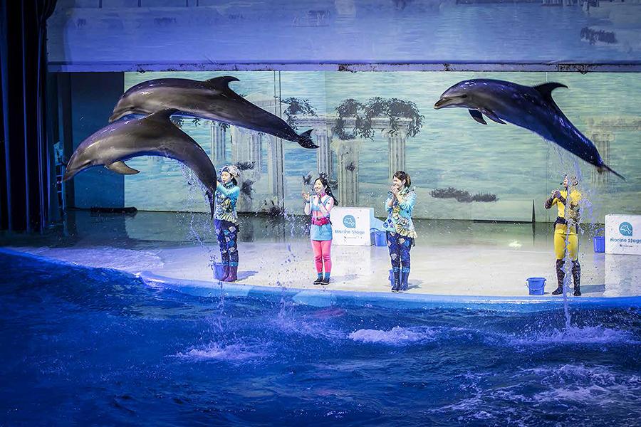 濟州島太平洋樂園動物表演_韓國景點_韓遊網