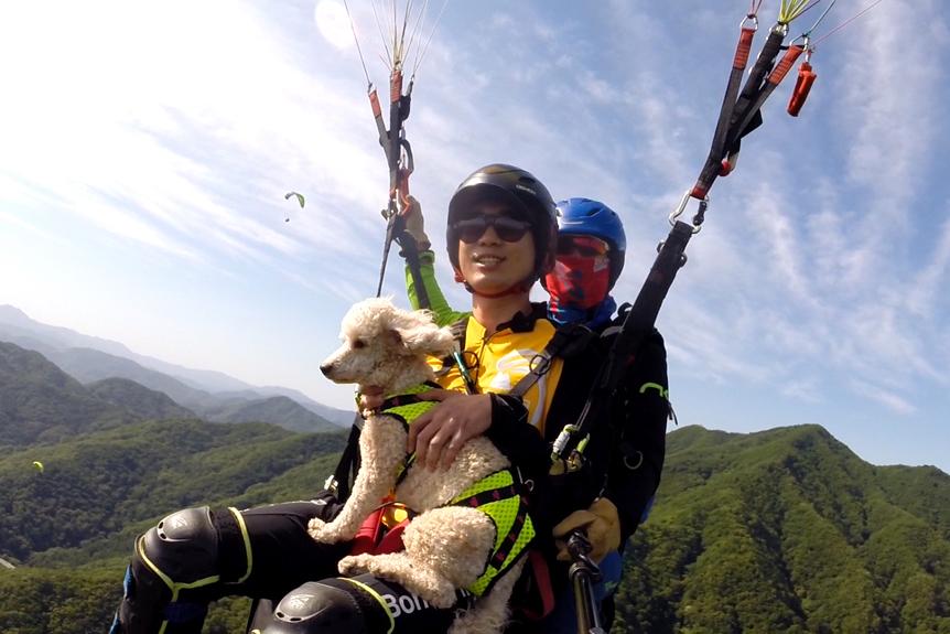 韓國楊平滑翔傘飛行園_韓國景點_韓遊網