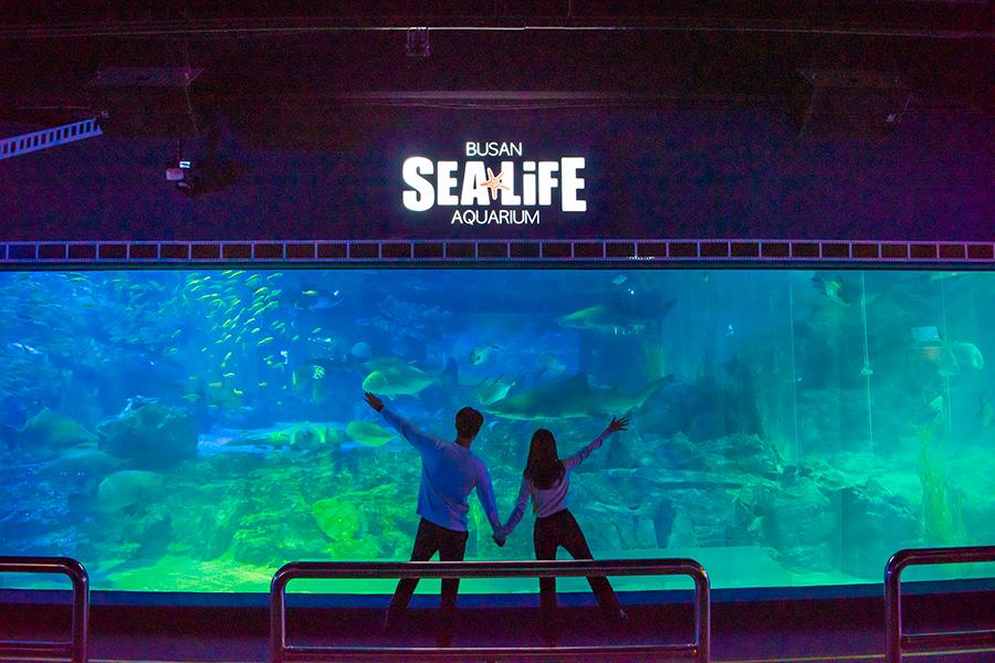 SEA LIFE 釜山水族館_韓國景點_韓遊網